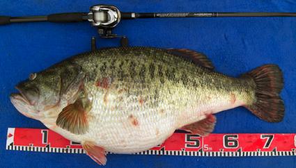 largemouth-bass_sm2