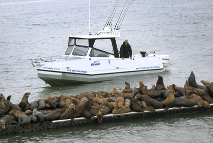 california-sea-lions