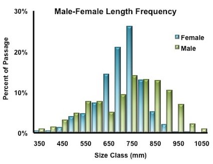 length-frequency