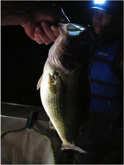 e-fishing-largemouth-bass1