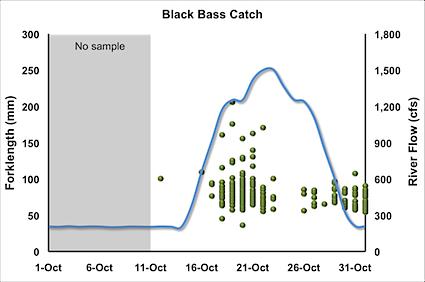 black-bass-catch