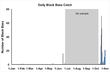 daily-catch