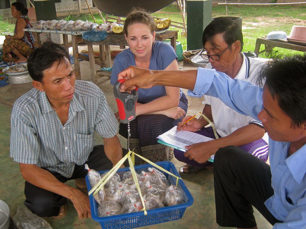 laos market survey fish sampling