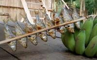 fish food mekong