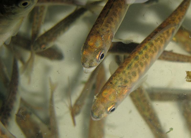 Hatchery for Fish hatchery jobs