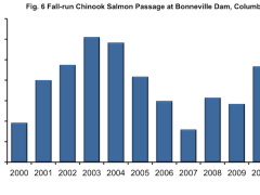 Columbia River Chinook