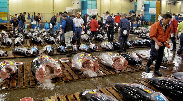 Bluefin tuna becoming a rare delicacy for Japan fish market