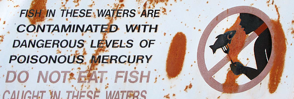 Pollution mercury in fish for Fish with high levels of mercury