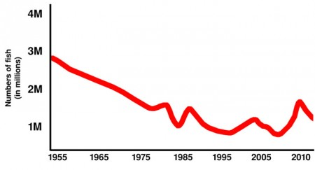 Graph of Red Snapper fall and rise