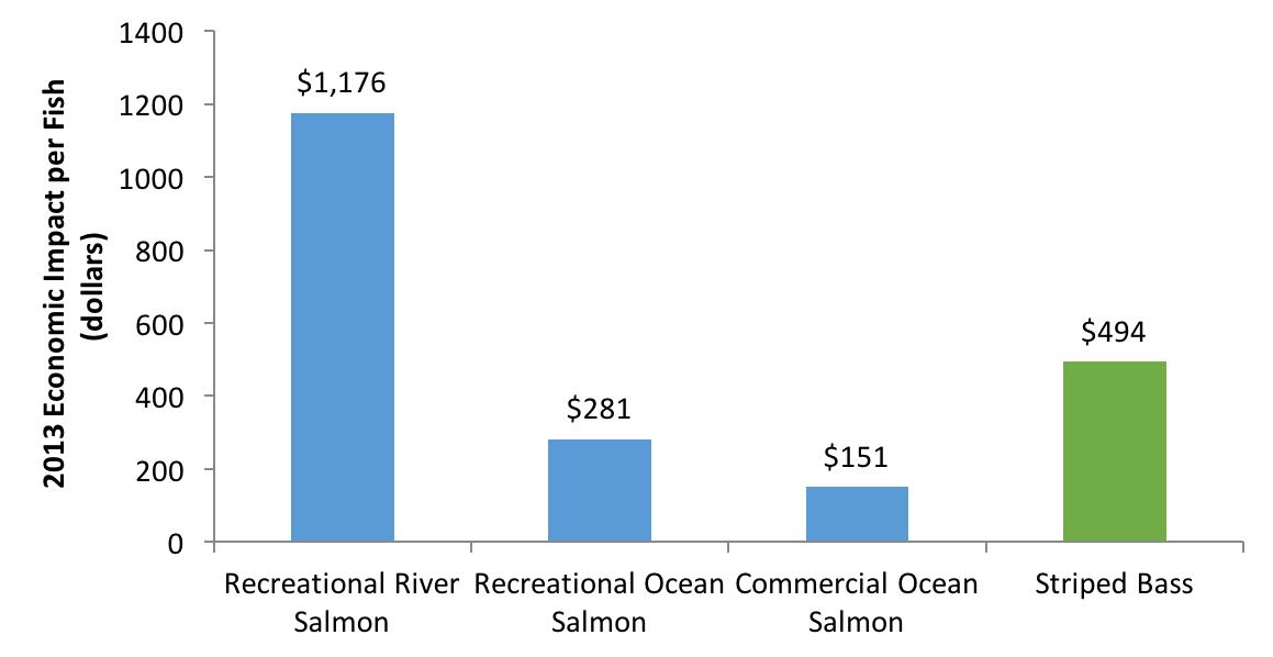 2013 Economic Impact Per Fish