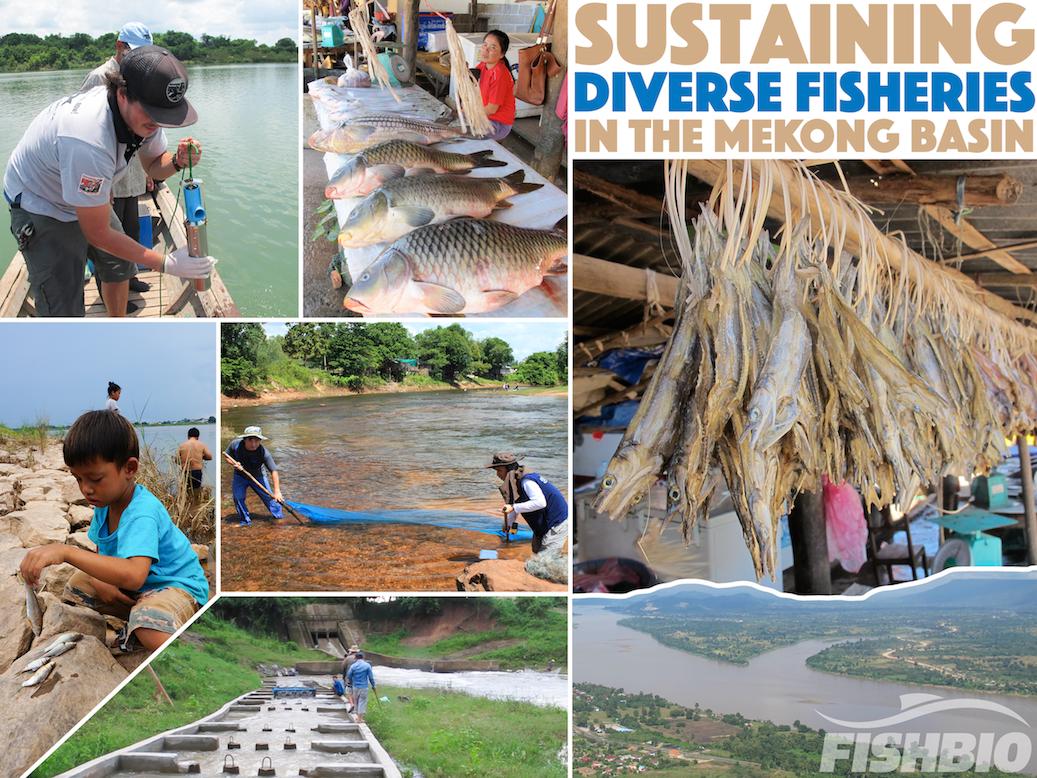 AFS_Mekong