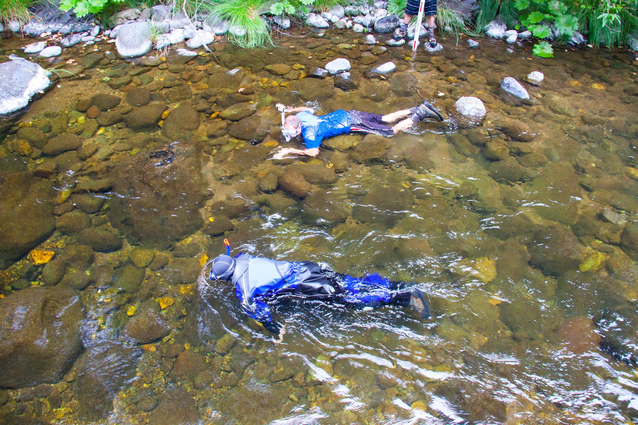 Big Chico Creek snorkel survey