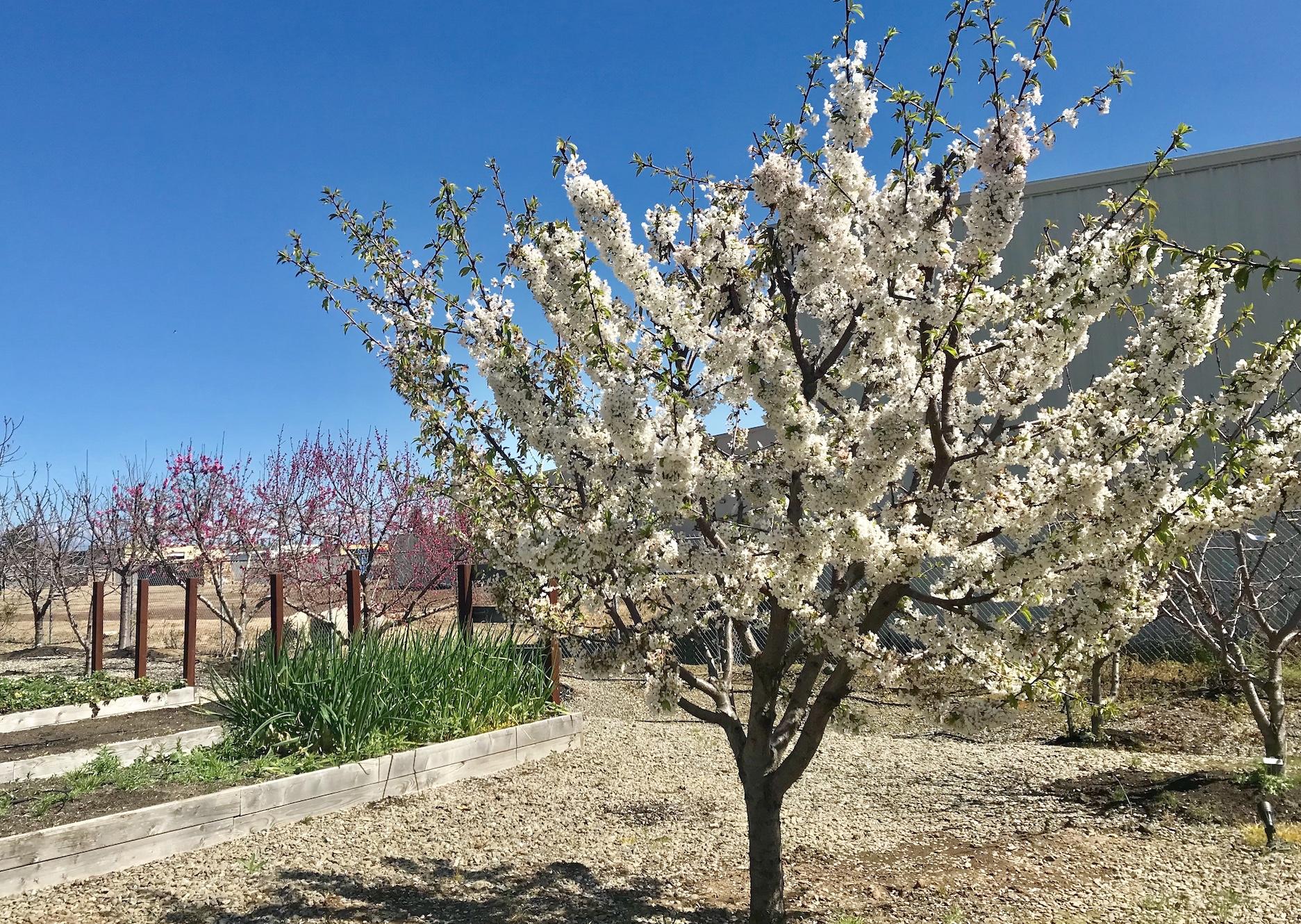 Blooming tree FiSHBIO Farms