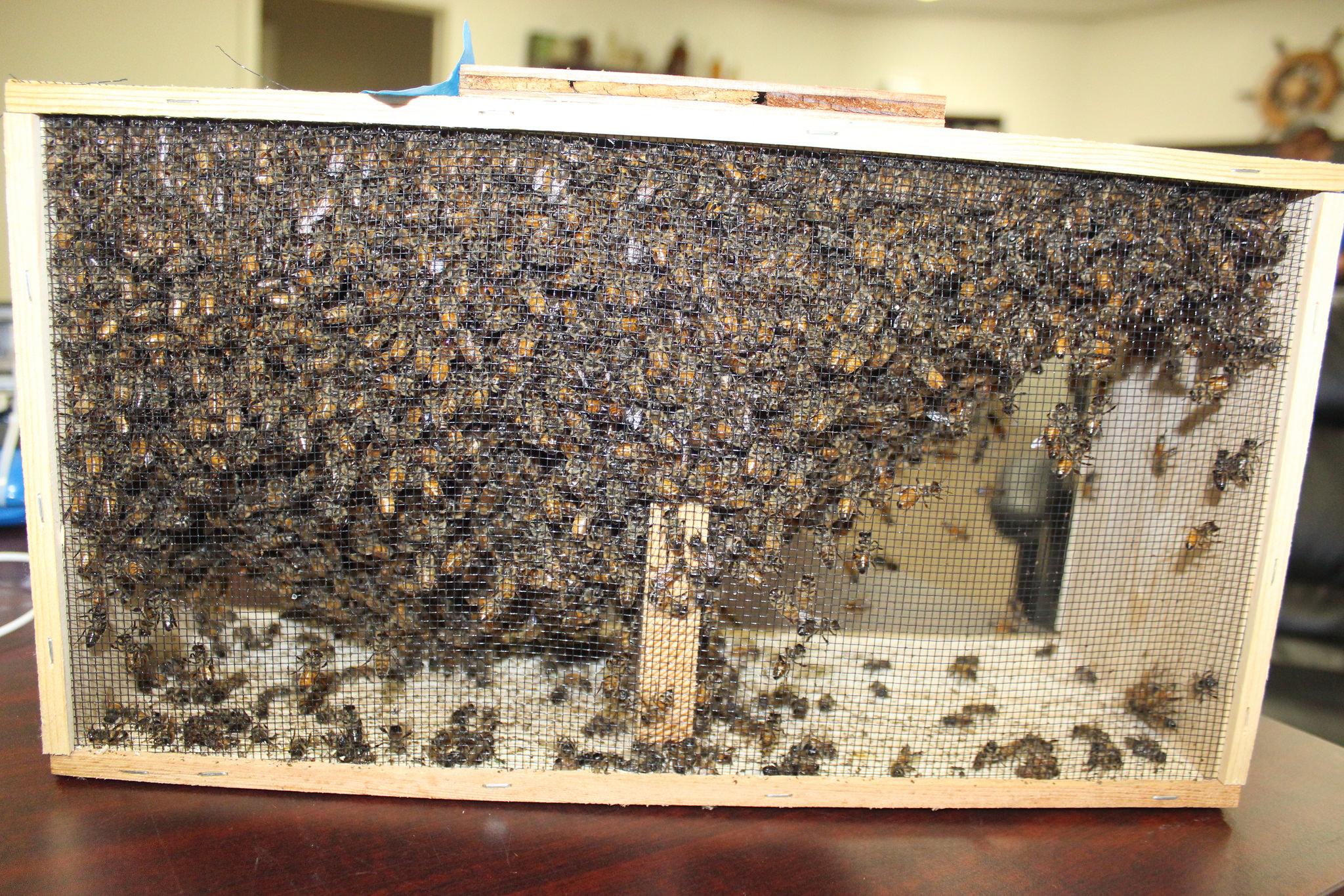Box of Honeybees