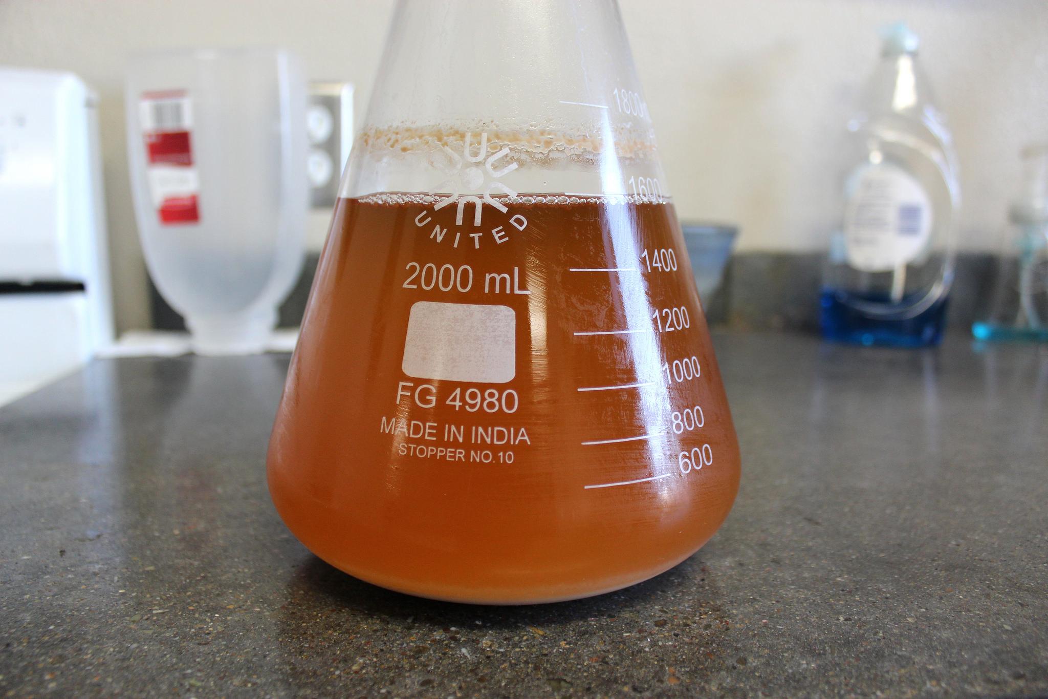 Brewing FISHBIO Beer