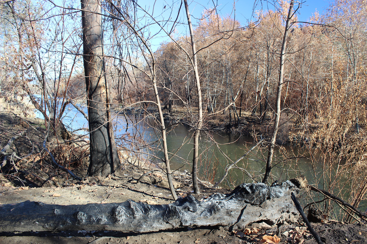 Burned tree log and tree along Butte Creek after Camp Fire