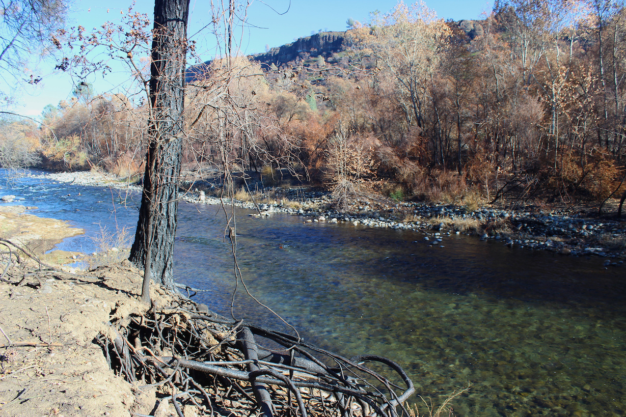 Burned vegetation along Butte Creek after Camp Fire