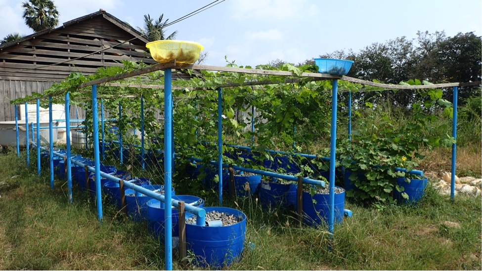 Home Aquaponics System furthermore Aquaponics In Cambodia also 472666923376908386 together with One Day Basic Course On Hydroponics Hpc in addition File Zion paintbrush plant castilleja scabrida growing in the rock. on growing fish and plants