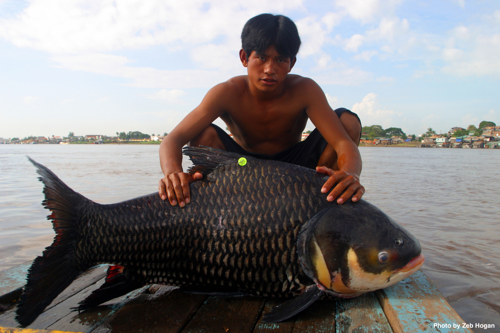 Cambodian Fisherman with Giant Barb