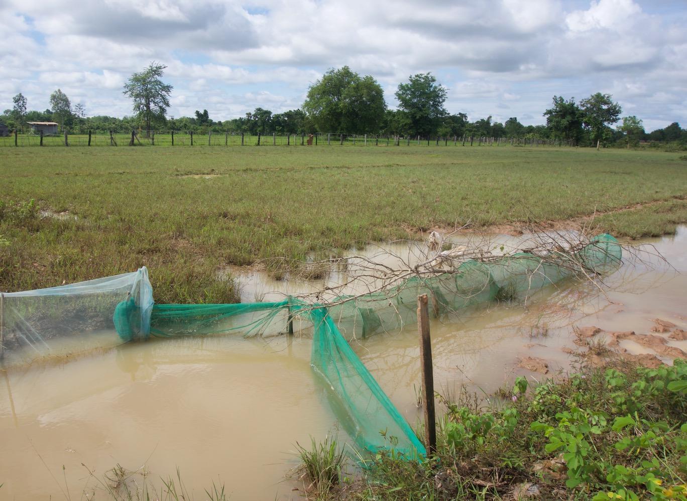 Cambodian fyke trap in a canal