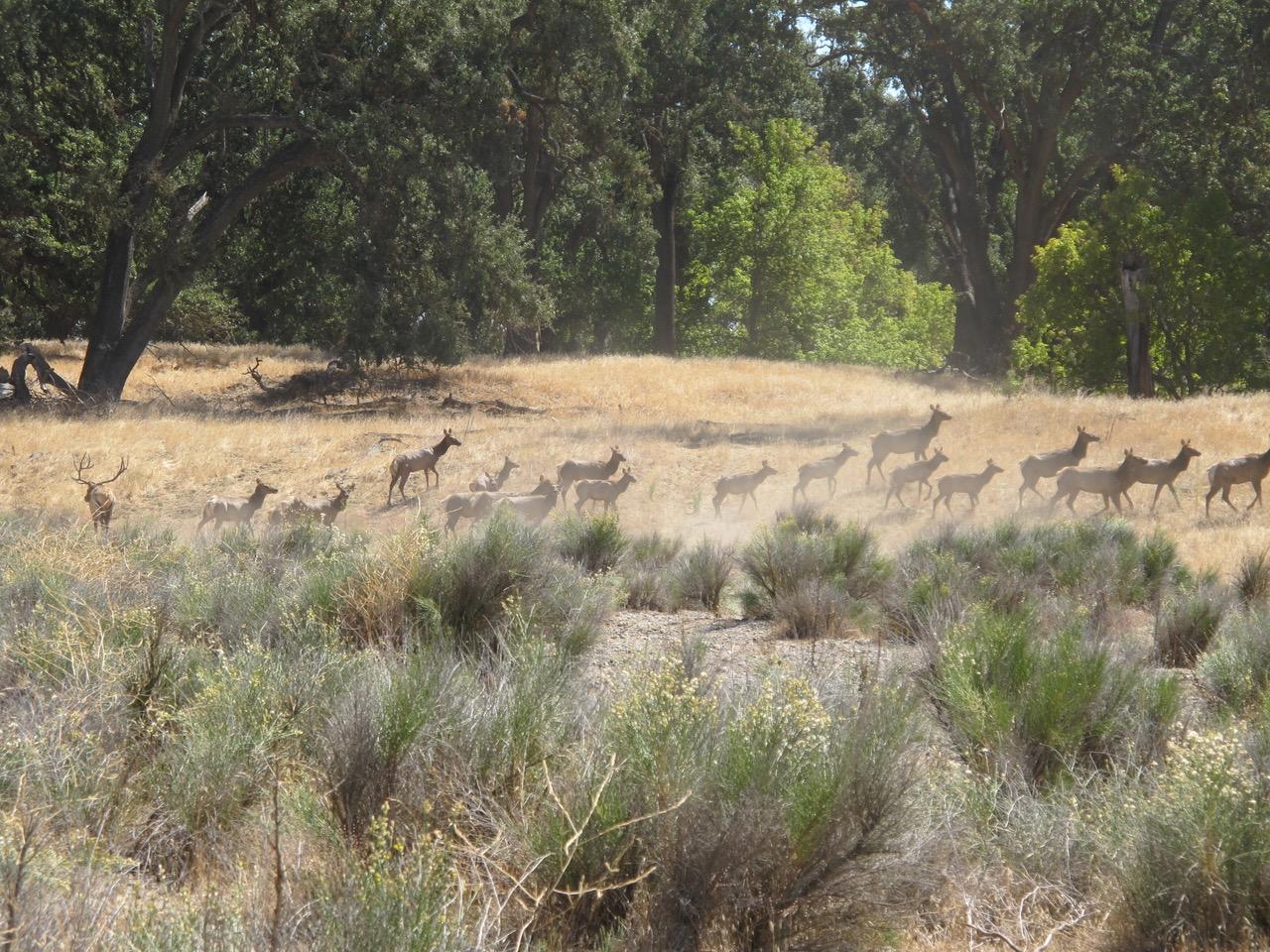 Camp-Roberts-Elk_9242012_009