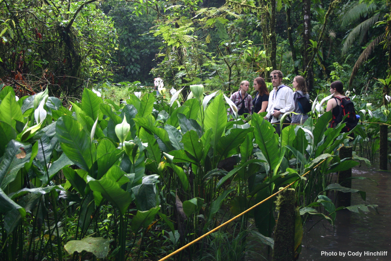 and bromeliads, bryophytes, fabaceae