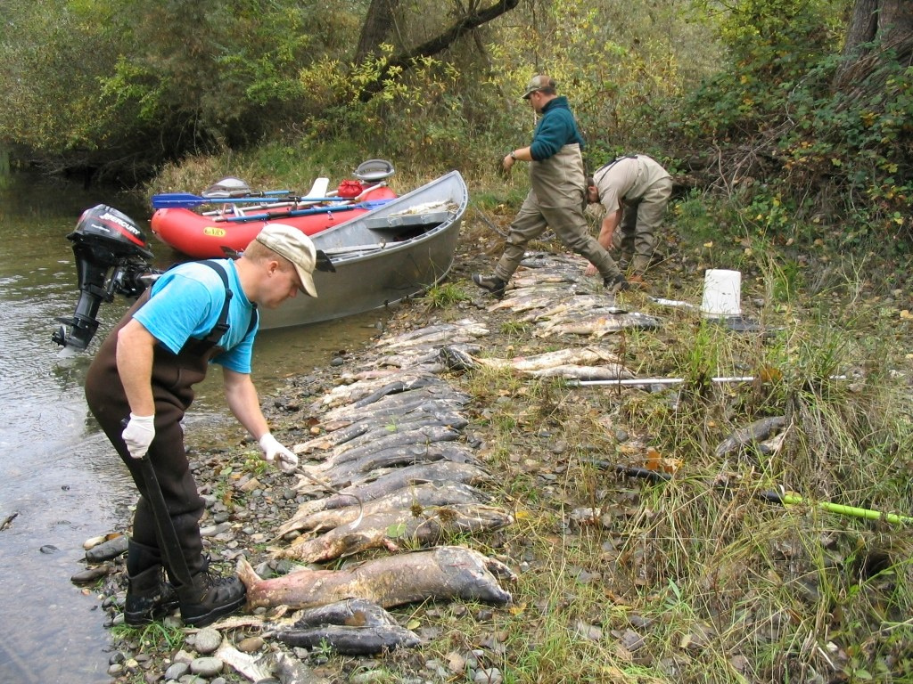 Carcass survey