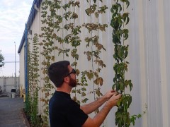 Checking hops