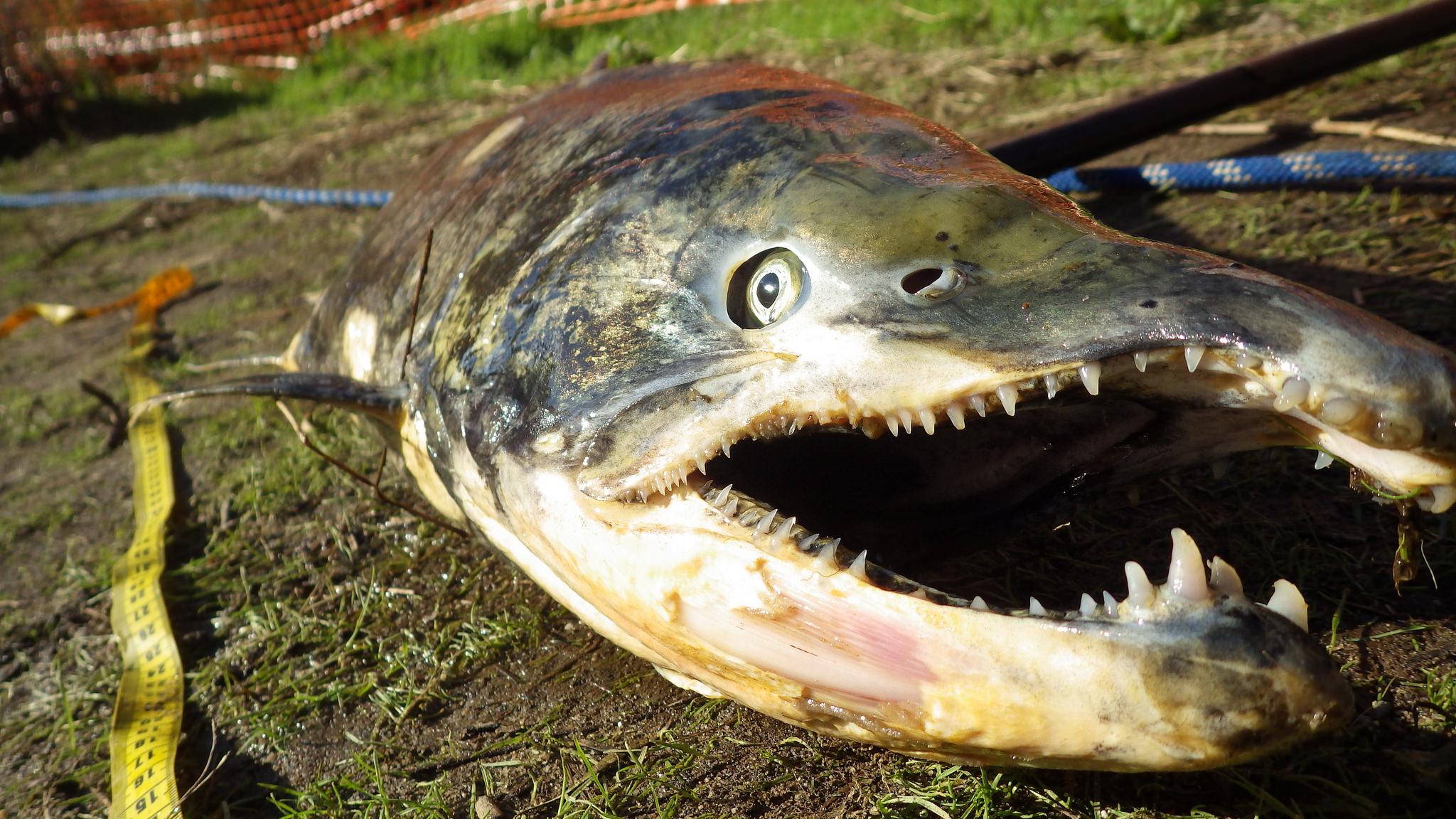 Bigfish Online