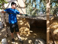 Cleaning the coop
