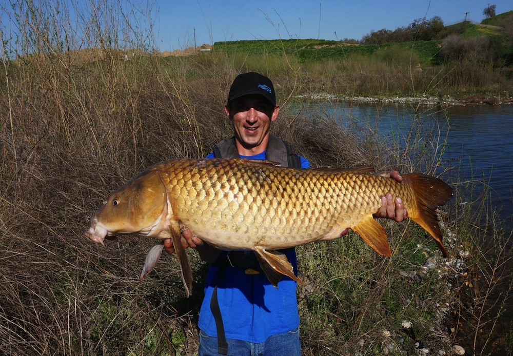 Common Carp in the Central Valley
