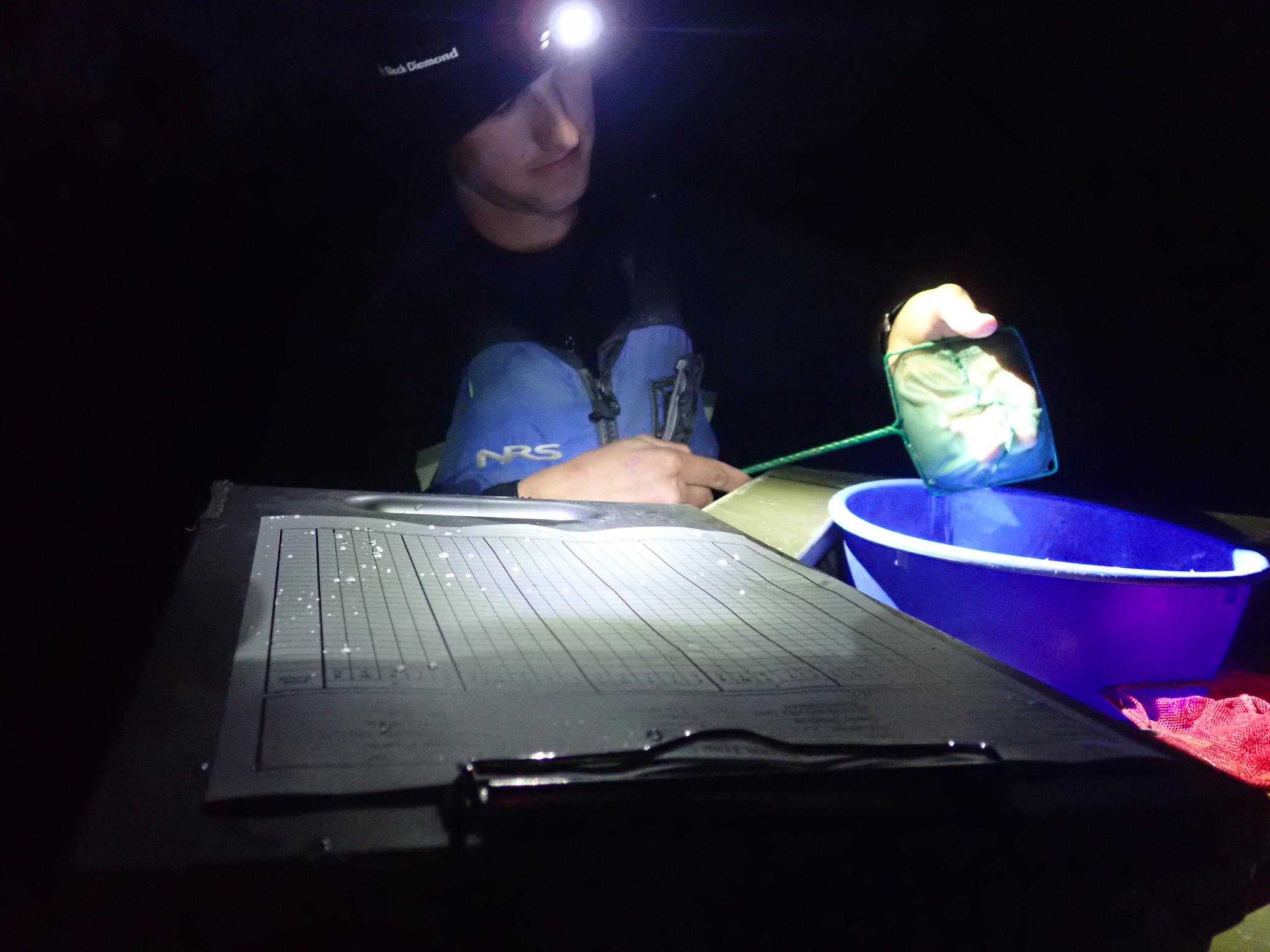 Counting fish at night