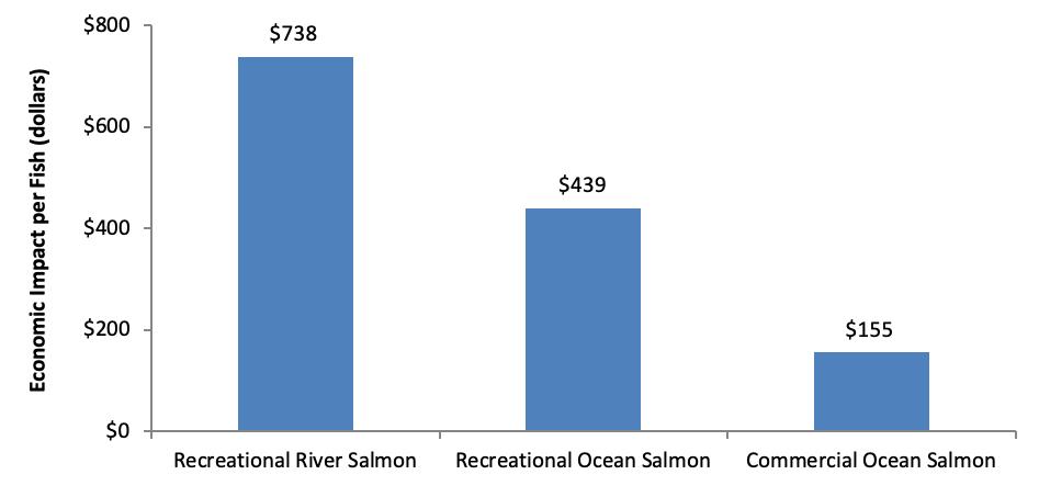 Economics Per Fish