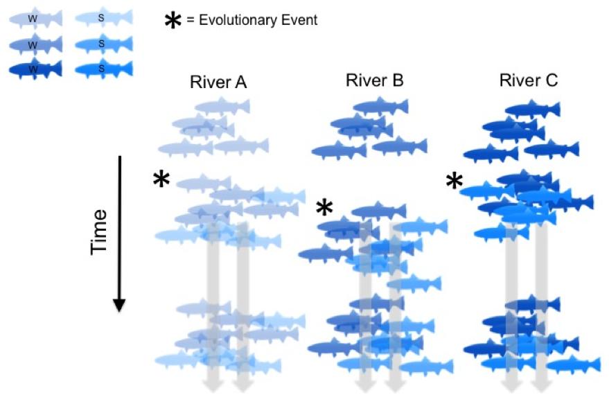Eolution Diagram 2 - Parallel Evolution