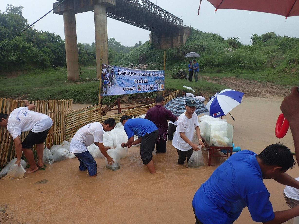 Fish Releasing Day in Laos