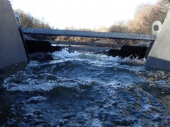 Fish ladder with flow