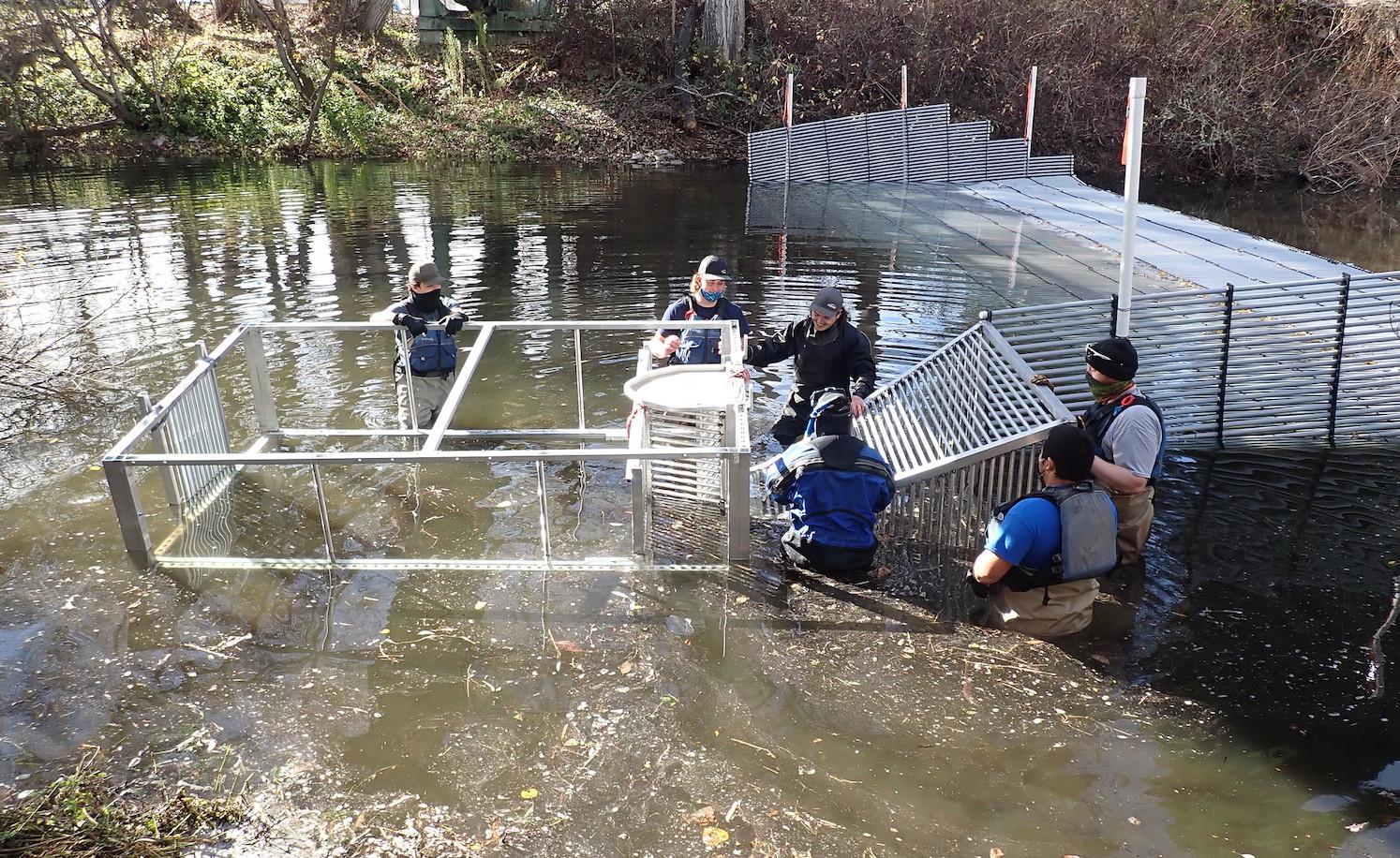 Fish trap on Carmel River Weir