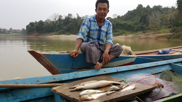 Fisherman with his daily fish catch from a gillnet on the Chindwin River