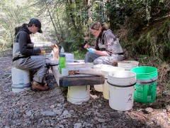 PIT tagging fish on the Noyo River