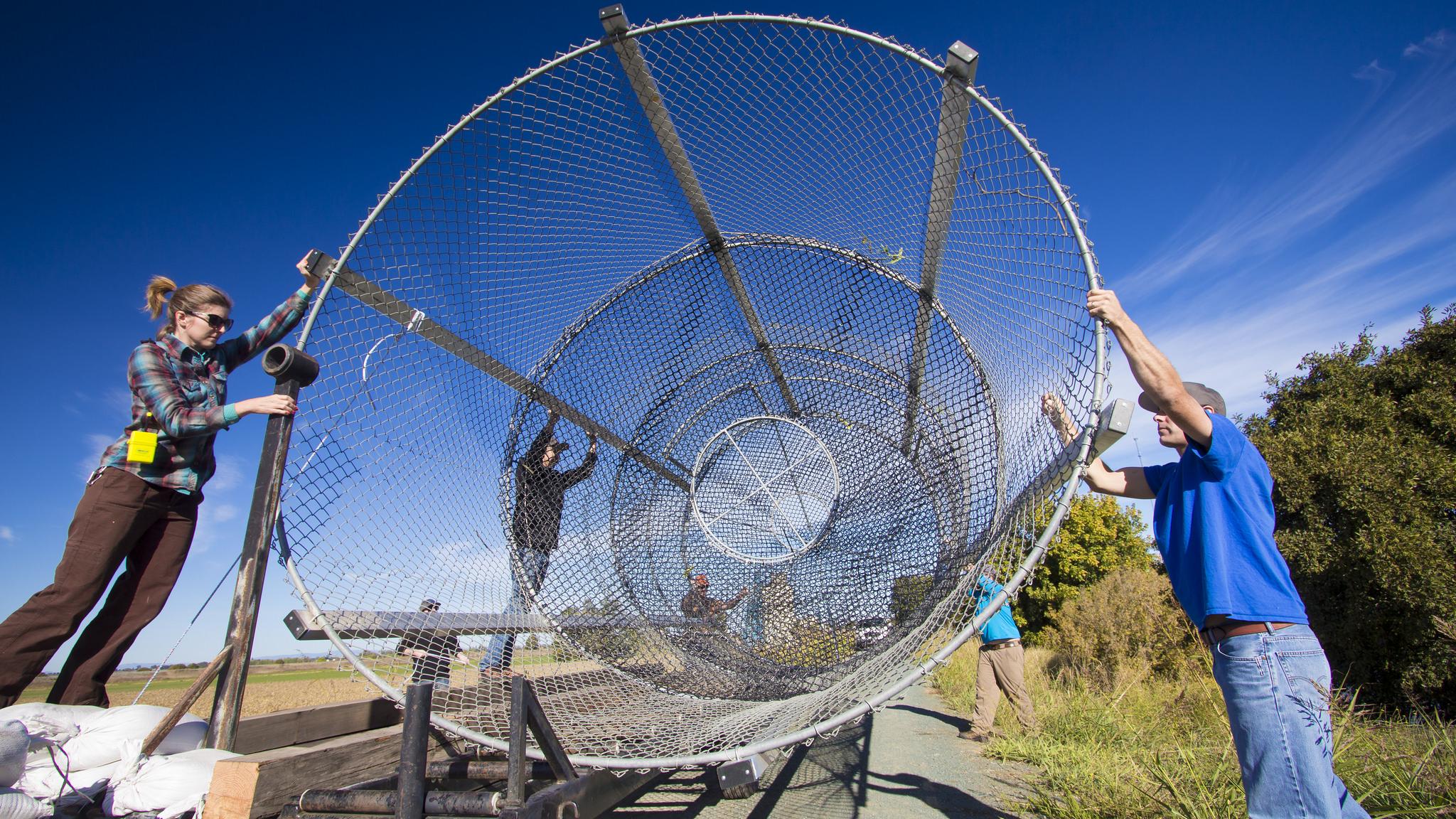 Wire fyke trap teamwork