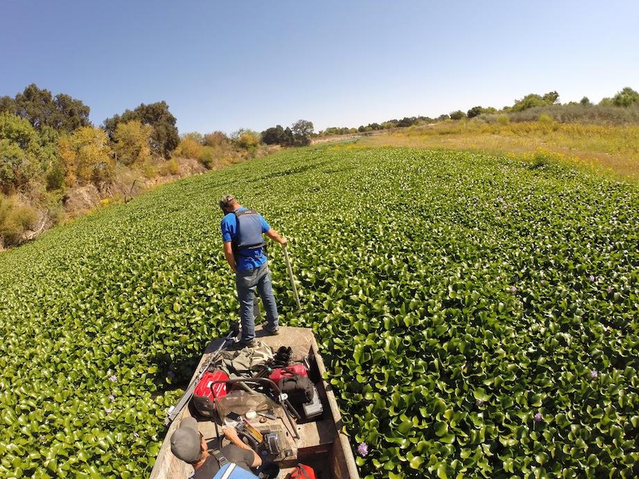 Hyacinth monitoring
