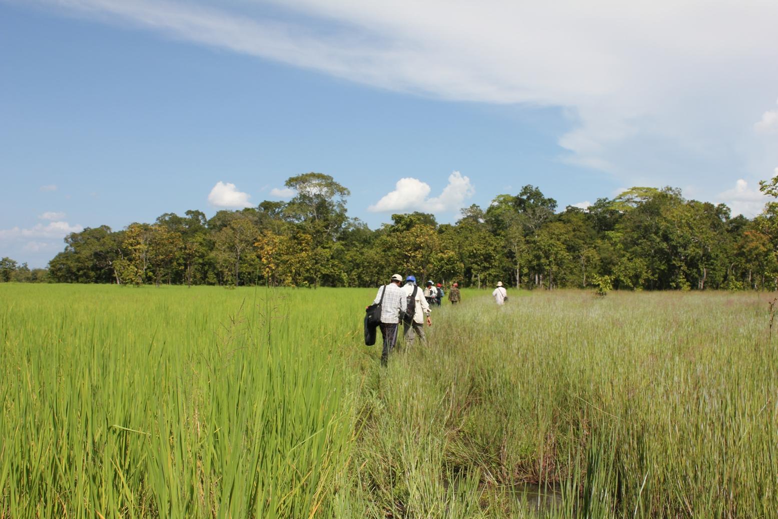 Wetlands field survey