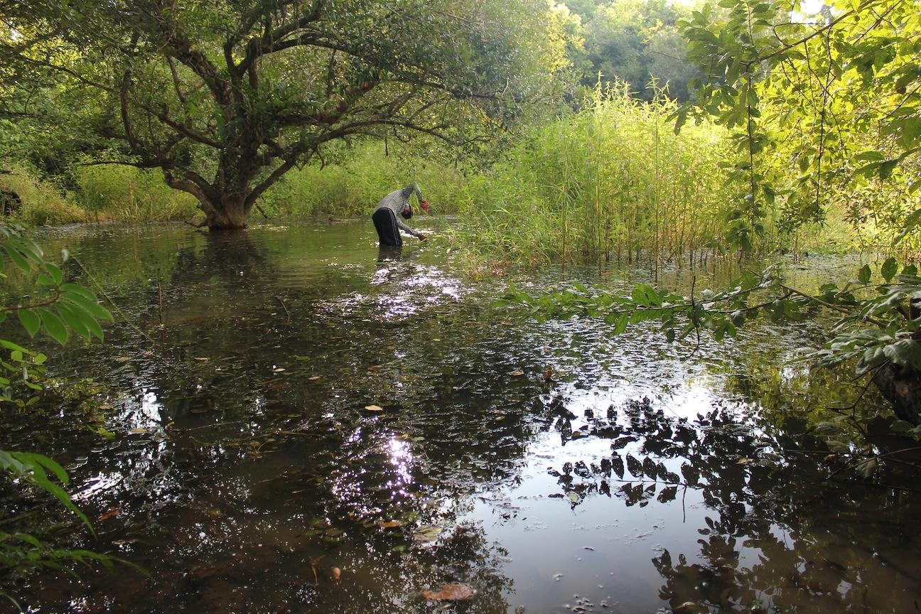 Wetlands survey