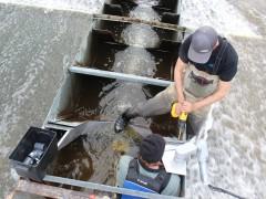 Installing fish ladder camera system