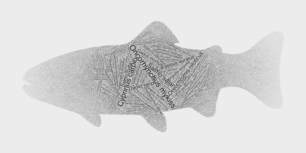 Interesting Fish Word Cloud