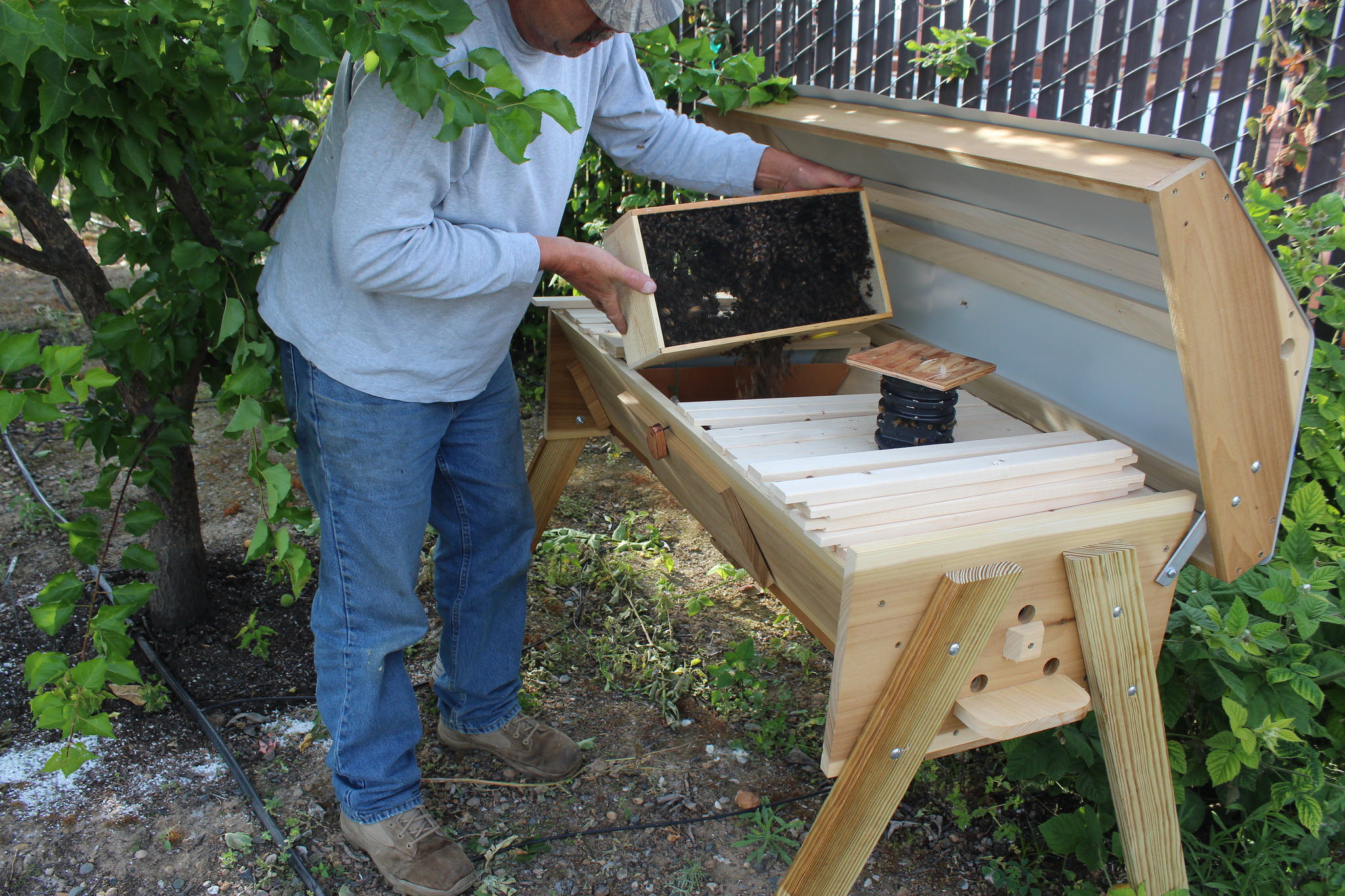 Introducing bees into the hive