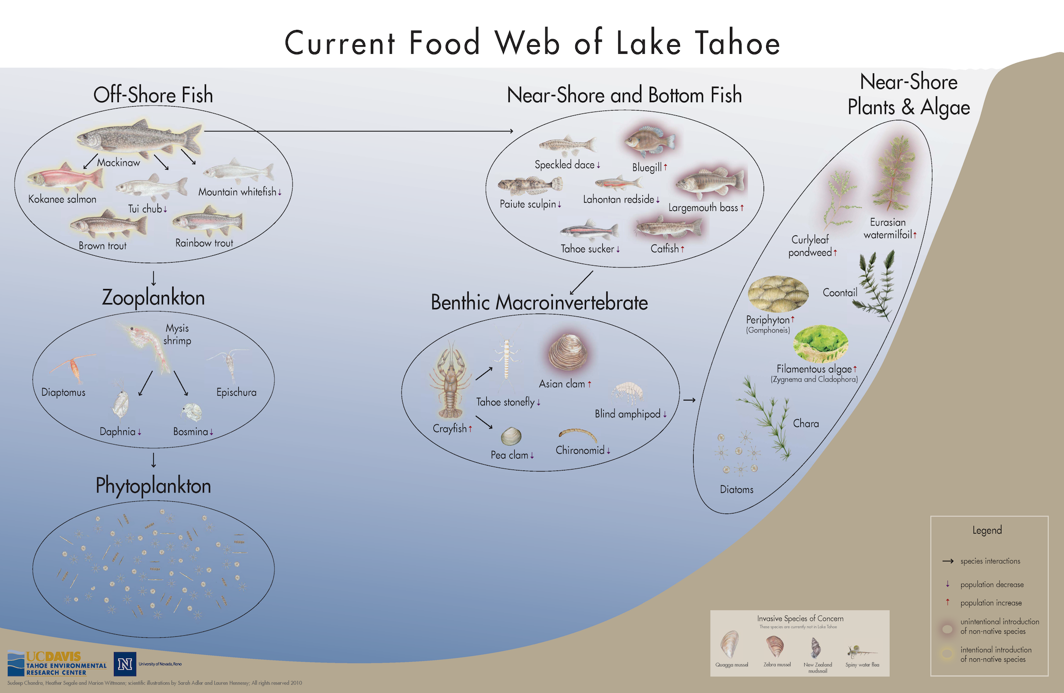 Lake Tahoe Current Foodweb