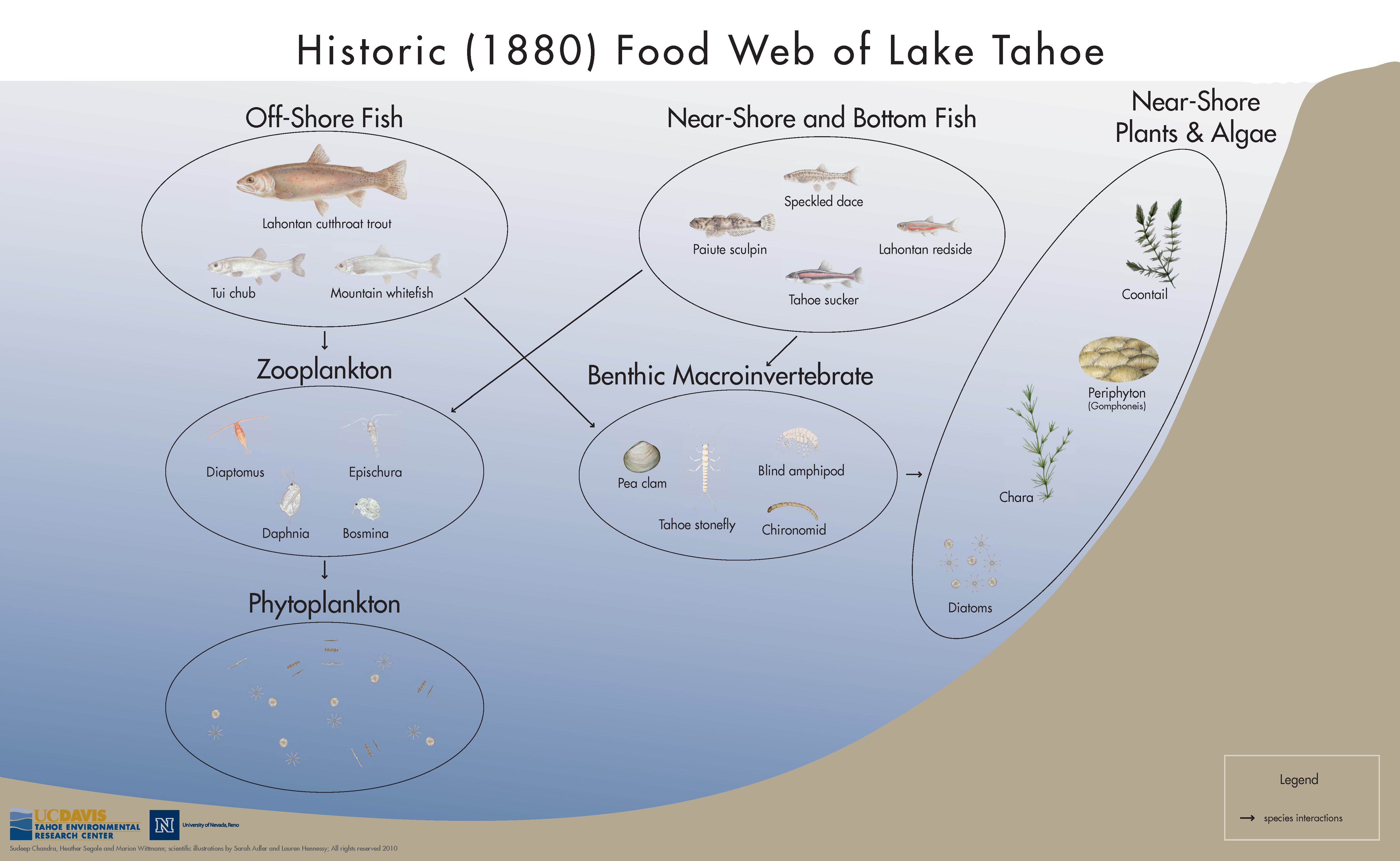 Lake Tahoe Historic Foodweb