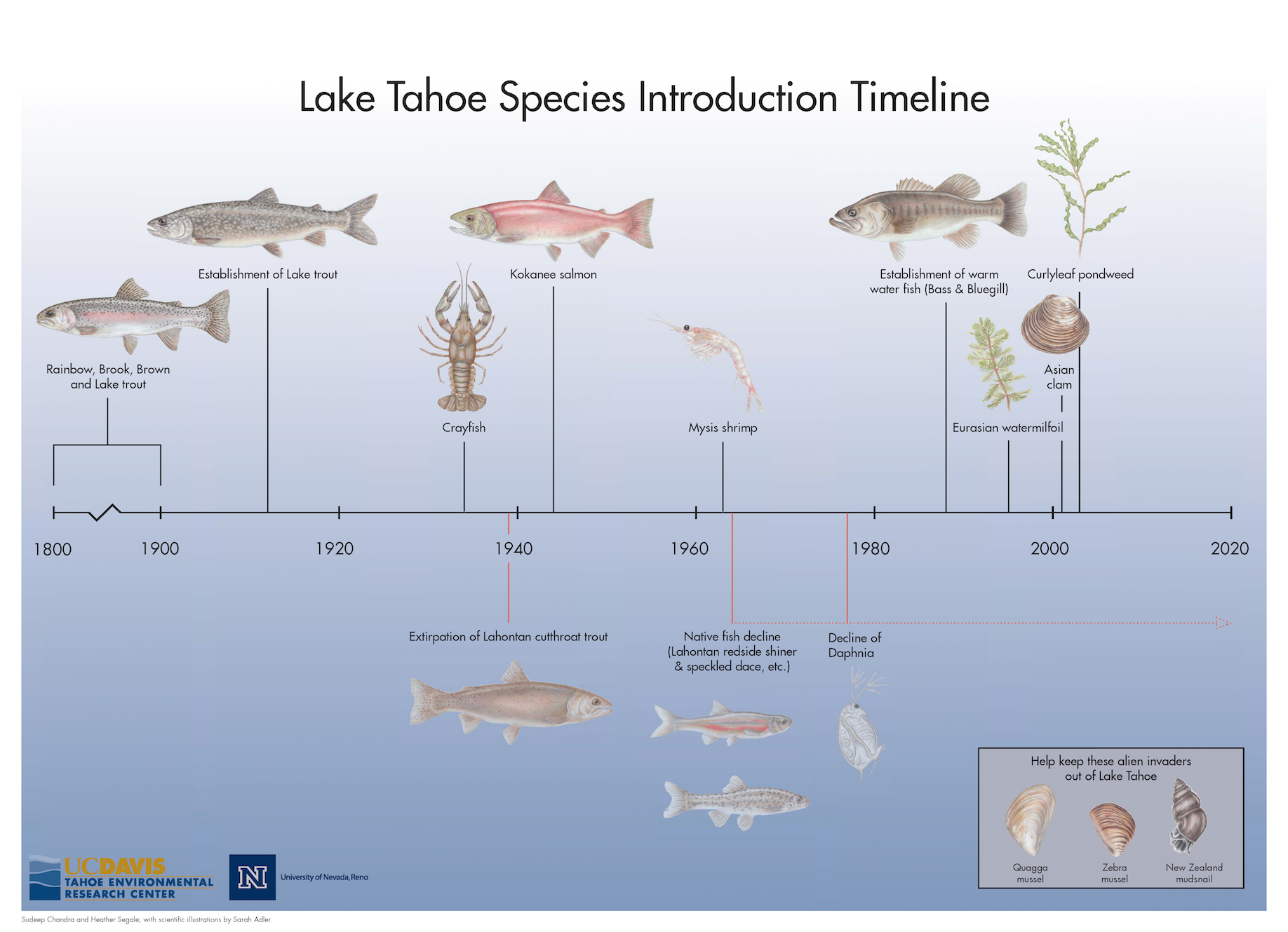 Lake Tahoe Invasive Species Timeline