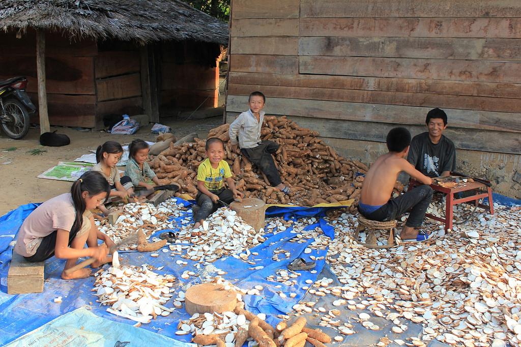 Lao family chopping cassava